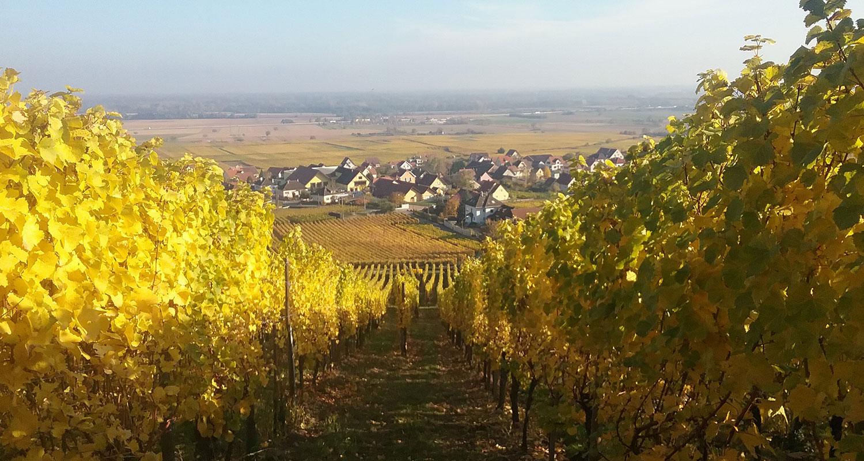 Charles Fahrer vente en ligne vins d'Alsace - Domaine vinicole route d'Alsace